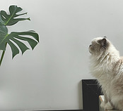 Cat eyeing up a house plant