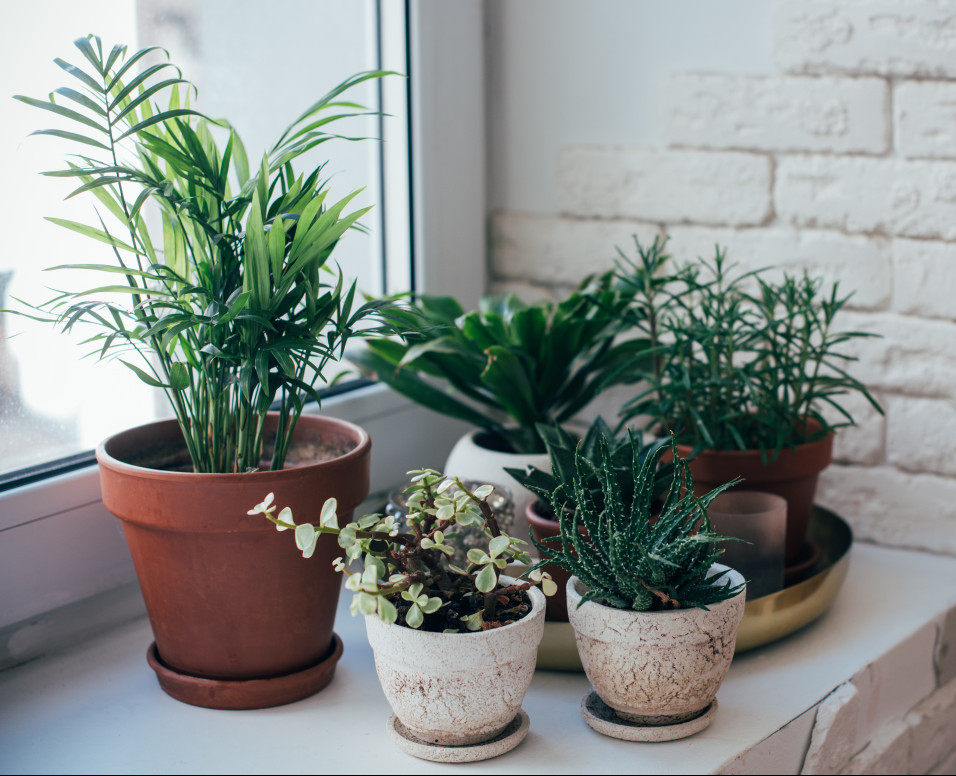 grouping of indoor plants