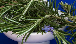 Rosemary Compatible with Oregano